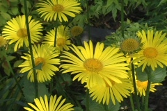 Yellow flowers in breeze ms Stock Footage