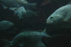 fish - stock footage