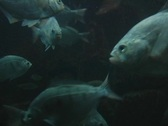 Stock Video Footage of fish