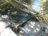 Stock Video Footage of water - river with fallen tree 2