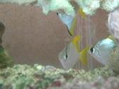 Fish, aquarium - 1 Stock Footage