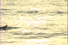 Hawaii-Surfing_Turtle_Bay Stock Footage