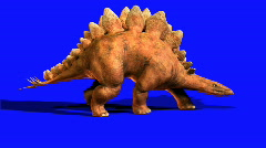 Stegosaur.mov Stock Footage