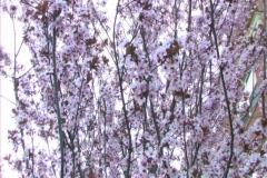 TreeFlowers Stock Footage
