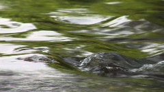 Arcola  VA - Stream with Green Reflection Stock Footage