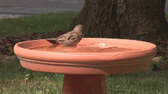 Bird in bath Stock Footage