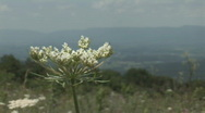 Stock Video Footage of Flower with town of Luray