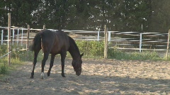 Riding horse walking in a corral, part I Stock Footage