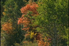 fall trees 5 - stock footage