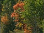 Stock Video Footage of fall trees 5