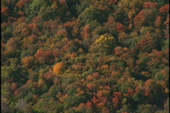 fall trees 3 - stock footage