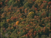 Stock Video Footage of fall trees 3