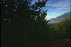mountain trees - stock footage