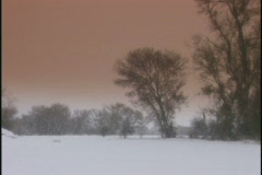 winter trees right - stock footage