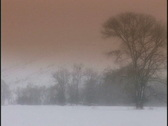 Stock Video Footage of winter trees med