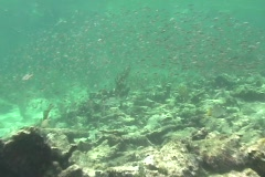 School of Fish - stock footage