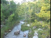 Stock Video Footage of Wooded Stream 1