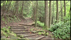 Stairway into Forest - MOS - stock footage
