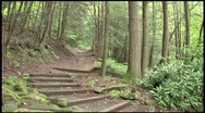 Stairway into Forest - MOS Stock Footage