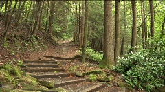 Stairway into Forest Stock Footage