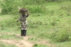 Elderly woman struggles with a load of firewood in Rwanda, Africa - stock footage