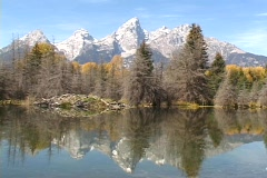 Beaver lodge at the base of the Teton Mountians in Wyoming, United States - stock footage