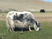 Mongolia Stock Footage