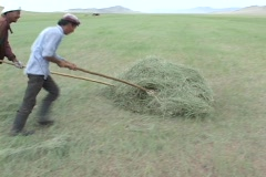 Mongolia: Haying by hand Stock Footage
