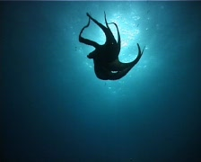 Octopus backlight 01 PAL Stock Footage
