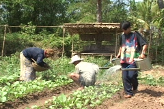 Cambodia: working in family garden Stock Footage