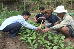 Cambodia: Agricultural Instruction - stock footage