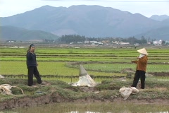 Vietnam: Irrigating Rice Paddy - stock footage