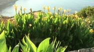 Flowers  Stock Footage