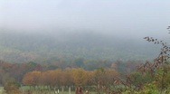 Martinsburg  WV - Fall Trees with Fog Stock Footage