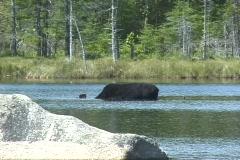Moose 2 NS DV NTSC - stock footage