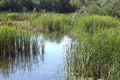 Wetlands 2 - stock footage