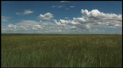 Grass Fields Stock Footage