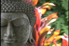 Buddha head  Stock Footage