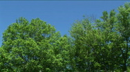 Trees and Blue Sky Stock Footage