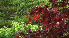 Red and green trees Stock Footage
