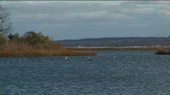 Intertidal Stock Footage