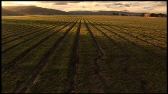 Grass Field up at twilight - stock footage