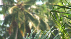 Cu Palm Leaves to wide of coconut trees Brazil Stock Footage