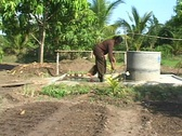 Stock Video Footage of Cambodia: Woman waters garden with water from well Stock Footage