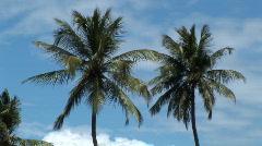 Tropical Blue Sky & Palm Trees Brazil Stock Footage