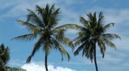Stock Video Footage of Tropical Blue Sky & Palm Trees Brazil