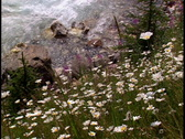 Stock Video Footage of Wildflowers and Creek