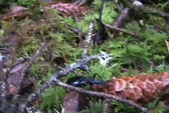 Insect Crawling on Forest Floor - stock footage