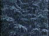Stock Video Footage of Snowing heavily in forest 4