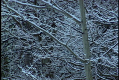 Snowing lightly on aspen trees Stock Footage